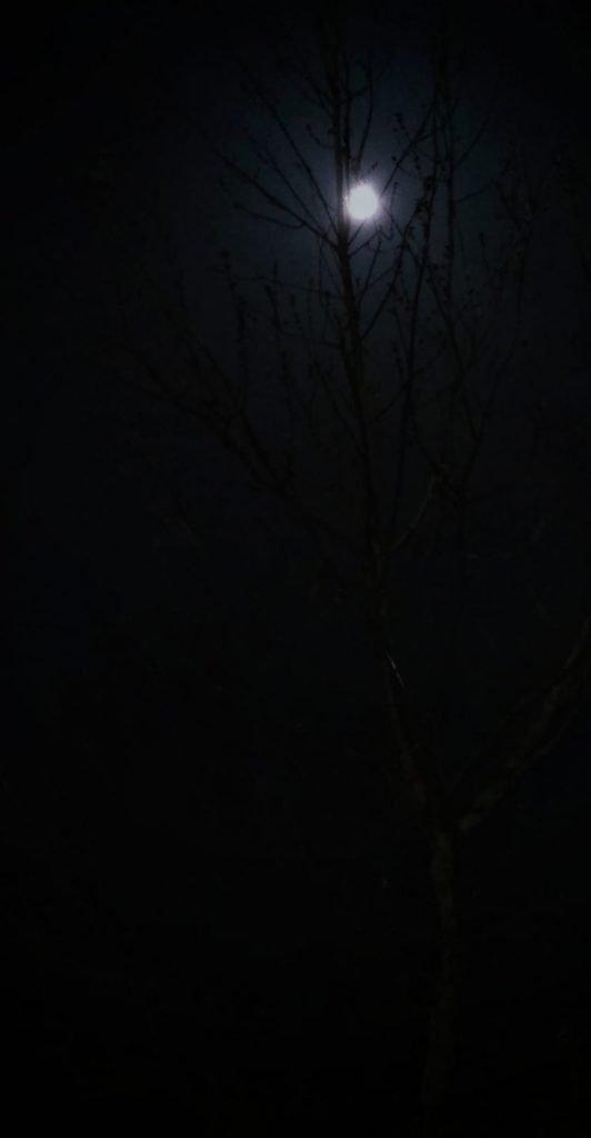 TSUKIMI, LA FESTA DELLA LUNA